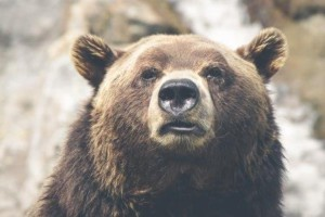 Hedging Stocks Against a Bear Market
